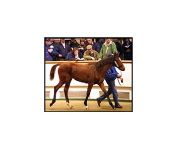 Potential buyers inspect Galileo's sister as she is led around Tattersalls' sales ring.