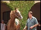 Trainer Craig Dollase accompanied Pacific Classic starter Futural as he schooled in the Del Mar paddock Thursday.