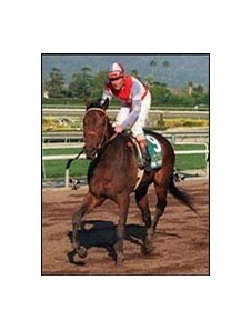 Mr Purple, with Eddie Delahoussaye aboard, after winning the 1996 Santa Anita Handicap.