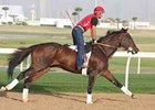 Informed, with Tony Romero aboard, gallops at Nad al Sheba