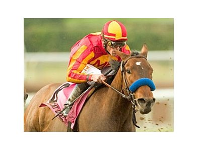 Pussycat Doll, shown winning the Santa Monica (gr. I) has been retired from racing because of a foot abscess.