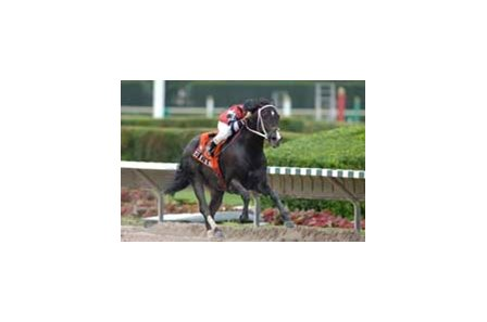 Yes He's the Man wins the Spend a Buck Handicap (gr. III) Saturday at Calder.