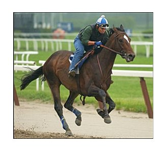 Empire Maker gallops at Belmont Thursday morning.