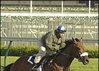 High Limit, breezing at Churchill Downs Wednesday.