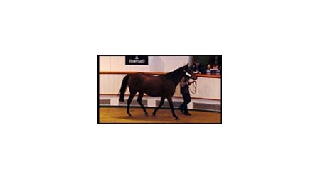 Zibilene brought a top bid of $2.2 million at Tattersalls sale Wednesday.