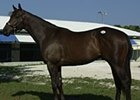 Seattle Slew colt purchased by Demi O'Byrne for $1-million.