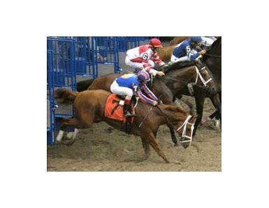 "Eventual Belmont winner Rags to Riches stumbles badly coming out of gate.<br><a target=""blank"" href=""http://www.bloodhorse.com/horse-racing/photo-store?ref=http%3A%2F%2Fpictopia.com%2Fperl%2Fgal%3Fgallery_id%3D16620%26sequencenum%3D0%26provider_id%3D368%26process%3Dgallery%26page%3Dthumbnails%26ref%3Dstory"">Order Belmont Photos</a>"