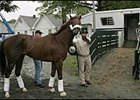Smarty Jones prepares to board a van at Belmont Park on Sunday.