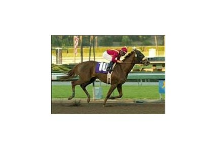 Swiss Diva wins the California Breeders Champion Stakes, Friday at Santa Anita.