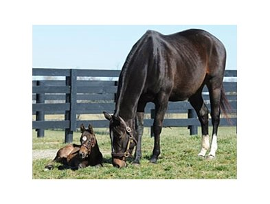 Zenyatta and her 2012 Foal