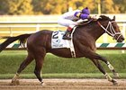 Cuba earned $393,180 in 2008 to help his sire Not For Love top the $6-million mark in 2008 progeny earnings.