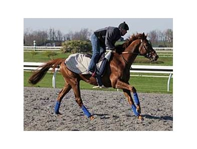 Mafaaz, shown training at Keeneland prior to the Blue Grass.