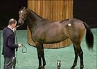 A. P. Indy filly, sold for $1.5 million at Saratoga sale.