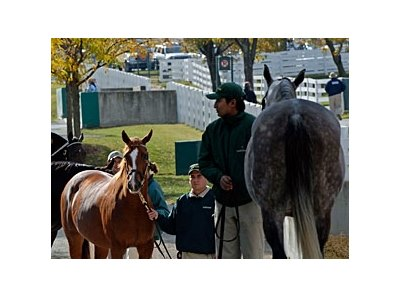 Session 13 of Keeneland's November mixed breeding stock saw a double-digit rise in gross, average, and median.