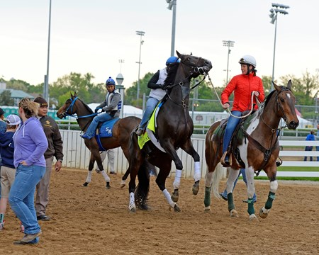 Caption: Upstart rearing as he comes off the track