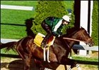 Millenium Wind worked Thursday at Churchill Downs in preparation for the 2001 Kentucky Derby.