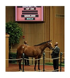A bay filly by Tiznow -- Storminthegarden brought $500,000 during the second session of the Keeneland September yearling sale.