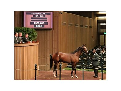 Hip 985, colt; Smart Strike - Madame Thor by Deputy Minister brought $550,000 during the Sept. 16 session of the Keeneland September yearling sale.