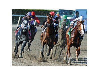 Shackleford (right) and Flashpoint (far left) in the Florida Derby, where they finished 2nd and 4th.