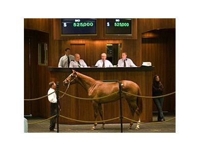 The sale's top seller: Filly; More Than Ready - Meadow Silk by Meadowlake, brought $525,000.