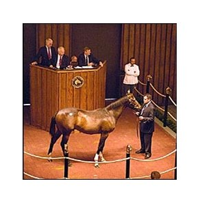 Aptitude colt, brought $350,000 at Fasig-Tipton yearling sale.