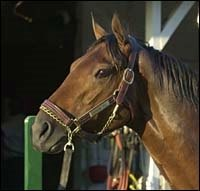 Dollar Bill Retired; Stud Plans Unknown
