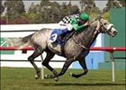 Grey Swallow and Alex Solis win the  Jim Murray Handicap, Saturday at Hollywood Park.
