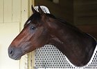 Jess's Dream Entered for Monday at Spa