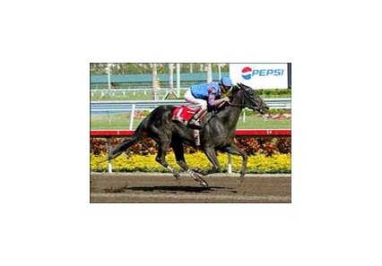 Taittinger Rose and jockey Edgar Prado win the Sabin Handicap, Saturday at Gulfstream Park.