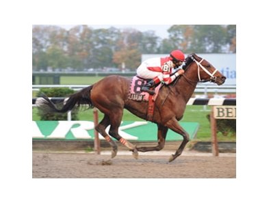 Kodiak Kowboy will not enter stud in 2009 and instead will remain in training.