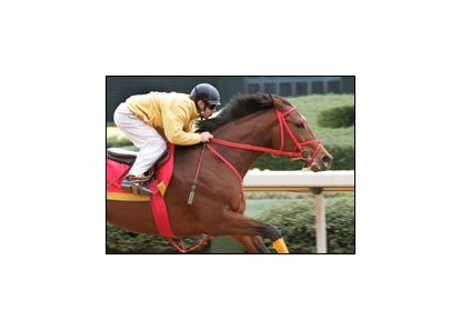 Afleet Alex, entered for Saturday's Mountain Valley Stakes.