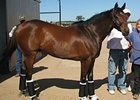 Mine That Bird left New Mexico for Churchill Downs on May 19.