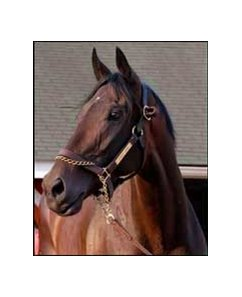 "Chesapeake Farm, who raised Street Sense, will be relocating to Wimbledon Farms.<br><a target=""blank"" href=""http://www.bloodhorse.com/horse-racing/photo-store?ref=http%3A%2F%2Fpictopia.com%2Fperl%2Fgal%3Fprovider_id%3D368%26ptp_photo_id%3D1223521%26ref%3Dstory"">Order This Photo</a>"