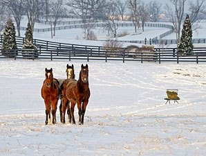 Blue Grass Farms Charities Event on Dec. 18