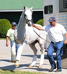 Hansen Settles in at Churchill Downs' Barn 42
