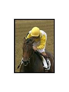 Chamrousse, winning the Black-Eyed Susan.