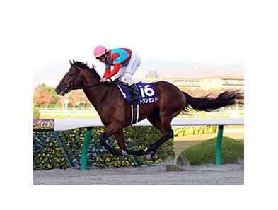Transcend pulls away to win the 2011 Japan Cup Dirt.