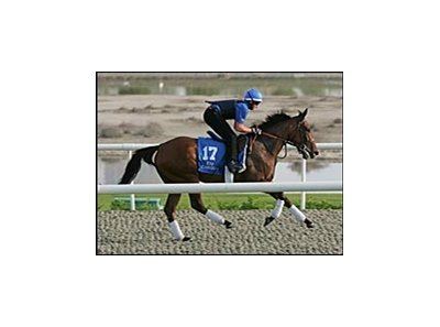 UAE Derby contender Folk, at the Al Quoz training center Wednesday, March 28.