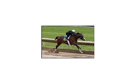 Elusive Quality colt, posted fastest workout time at Keeneland sale workouts.