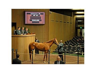 Hip 541 sold for $540,000 in the 2011 Keeneland January Sale.