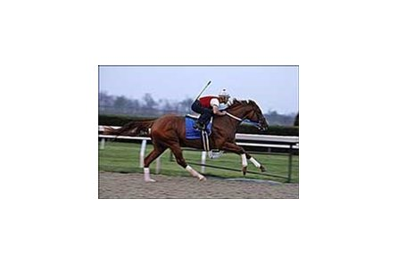 "Curlin worked Monday at Keeneland.<br><a target=""blank"" href=""http://www.bloodhorse.com/horse-racing/photo-store?ref=http%3A%2F%2Fpictopia.com%2Fperl%2Fgal%3Fprovider_id%3D368%26ptp_photo_id%3D1051556%26ref%3Dstory"">Order This Photo</a>"