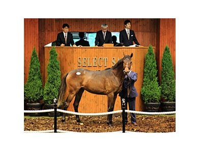 Hip 51 was sold at the top price of ¥250,000,000 ($3,137,880)
