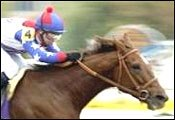 Trainer Says Azeri is Horse of the Year Material; May Face Males in 2003