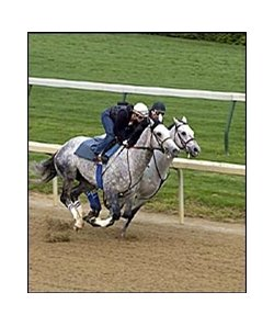 Preachinatthebar and Wimbledon, closest to rail, work at Churchill Downs on Saturday.