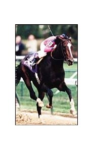 Tiznow, Horse of the Year and 3-year-old male Eclipse Award winner.