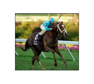 "English Channel pulls away to win the Breeders' Cup Turf.<br><a target=""blank"" href=""http://www.bloodhorse.com/horse-racing/photo-store?ref=http%3A%2F%2Fpictopia.com%2Fperl%2Fgal%3Fprovider_id%3D368%26ptp_photo_id%3D2627024%26ref%3Dstory"">Order This Photo</a>"