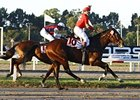 Lingote de Oro Wins Big Handicap in Argentina