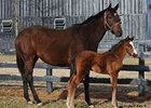 Balance and her first foal, a colt, by A. P. Indy.