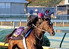Motion Leaning Toward Turf Race for Aruna