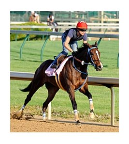 "Jody Slew worked 4 furlongs in :50 at Churchill Downs on April 16.<br><a target=""blank"" href=""http://www.bloodhorse.com/horse-racing/photo-store?ref=http%3A%2F%2Fpictopia.com%2Fperl%2Fgal%3Fprovider_id%3D368%26ptp_photo_id%3D8895683%26ref%3Dstory"">Order This Photo</a>"